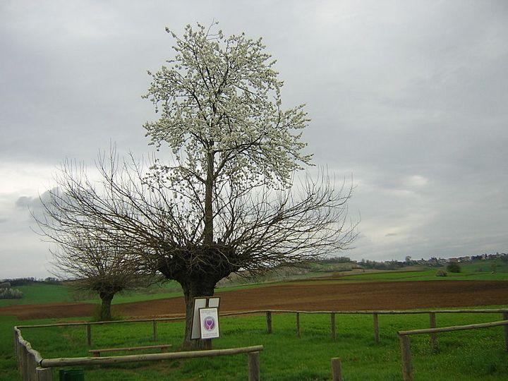 Grana and Casorzo's Double Tree
