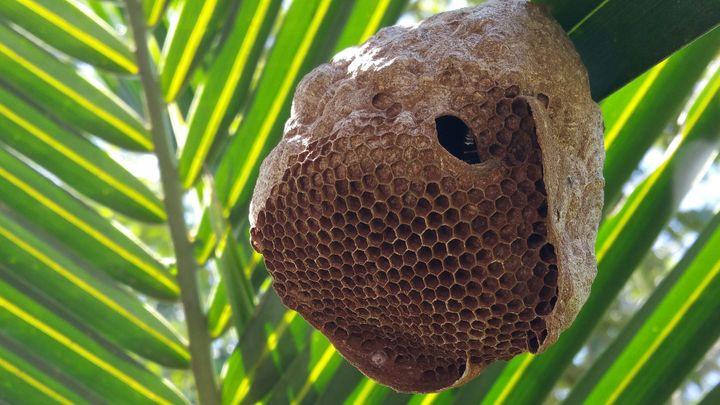 The Honey Bee's Revenge